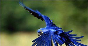 Con vẹt ăn gì hình ảnh đặc điểm chi tiết của loài vật này