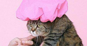 Tuổi thọ của mèo – Wikipedia tiếng Việt