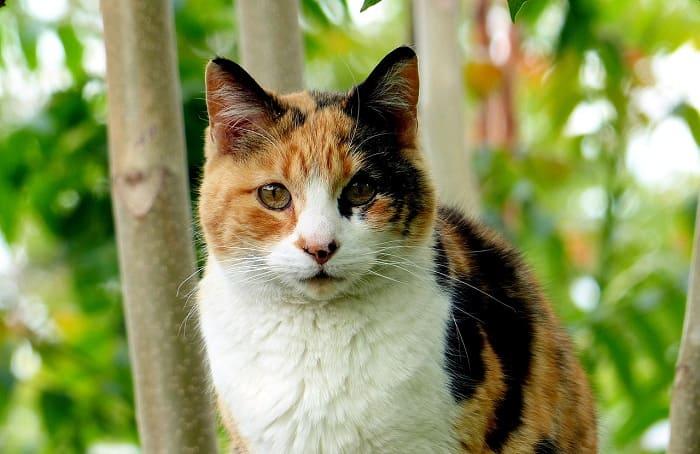 một bí mật về mèo tam thể Được hé lộ - gia Đình pet