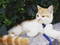 Mèo Vàng Trắng Vào Nhà Là Điềm Gì ❤️️ Đánh Số Mấy